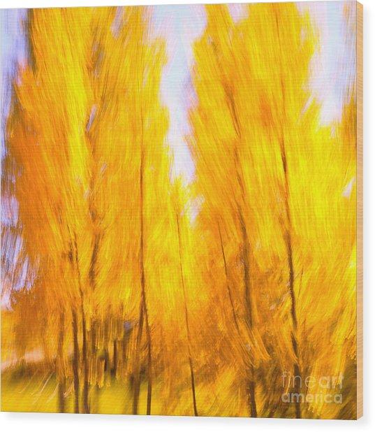 Aspen Fire Wood Print by Brian Brown