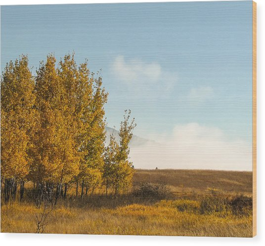 Aspen Fog Wood Print by Curtis Stein