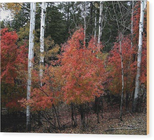 Aspen Glory Wood Print
