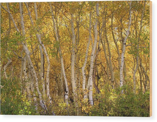 Aspen Glow Wood Print