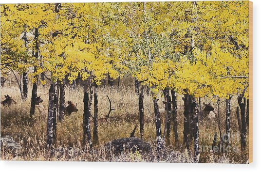 Aspen Grove Afternoon Wood Print