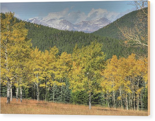 Aspen In Fall Mt Evans Wood Print