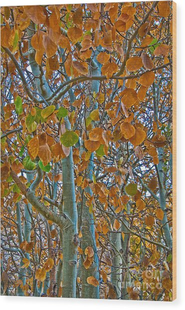 Wood Print featuring the photograph Aspen Leaves In The Fall by Mae Wertz