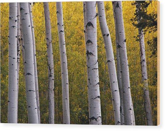 Aspen Light 2 Wood Print by Dave Dilli
