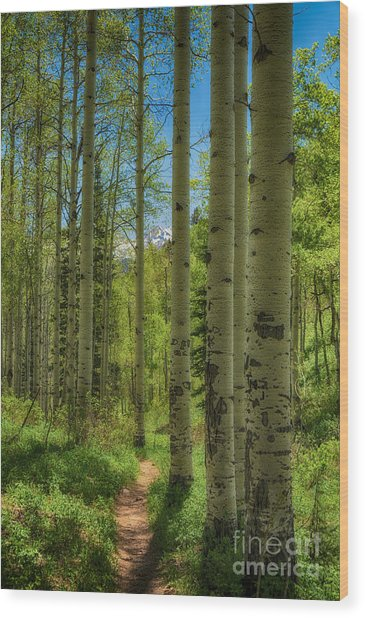 Aspen Lined Hiking Trail Hdr Wood Print by Mitch Johanson