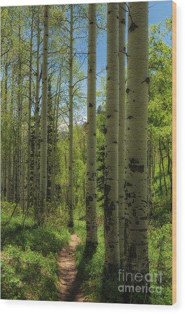 Aspen Lined Hiking Trail Wood Print by Mitch Johanson