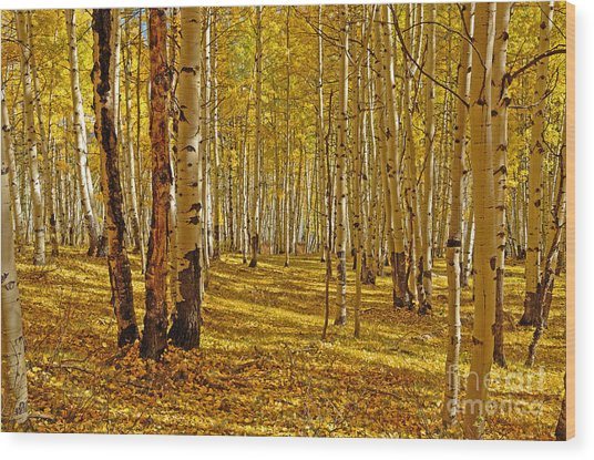 Aspen Sanctuary Wood Print