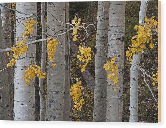 Aspen Trees Wood Print