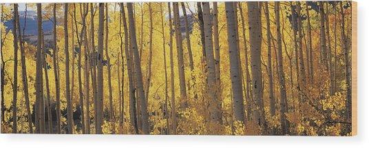 Aspen Trees In Autumn, Colorado, Usa Wood Print