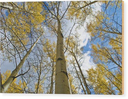 Aspen Tress To The Sky Wood Print