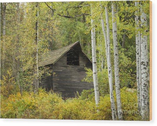 Aspens And Barn Wood Print