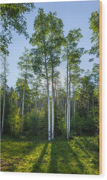 Aspens At Sunrise 1 - Santa Fe New Mexico Wood Print