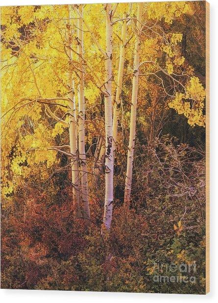 Aspens In Autumn Wood Print
