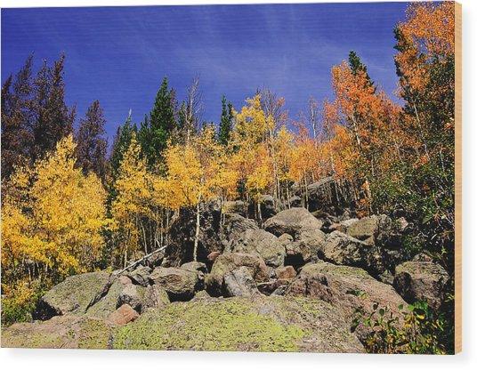 Aspens In Fall Wood Print