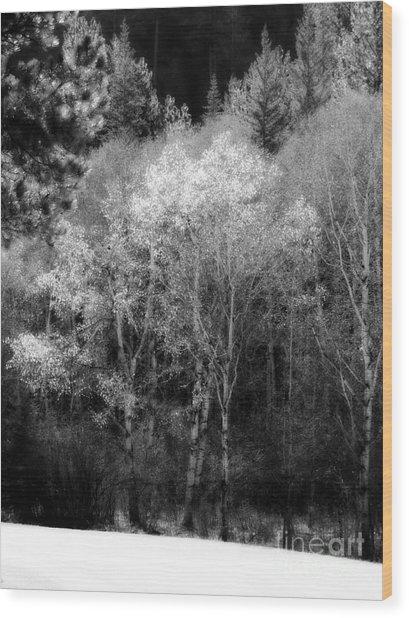 Aspens In Morning Light Bw Wood Print