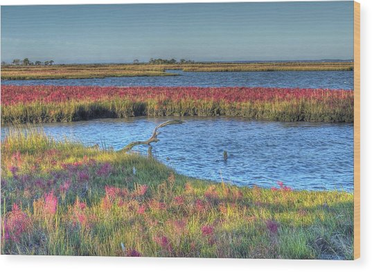 Asseteague Island Salt Marsh Wood Print