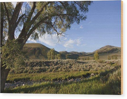 At Lamar Buffalo Ranch Wood Print