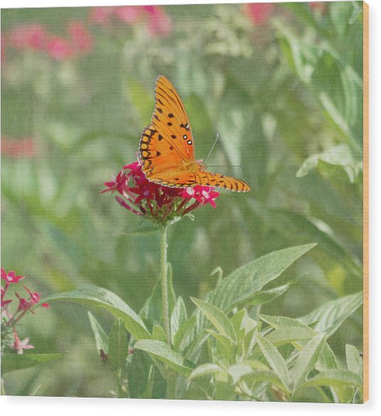 At Rest - Gulf Fritillary Butterfly Wood Print