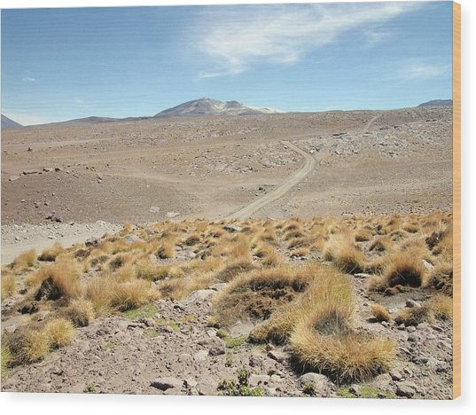 Atacama Desert Vegetation Wood Print by European Southern Observatory