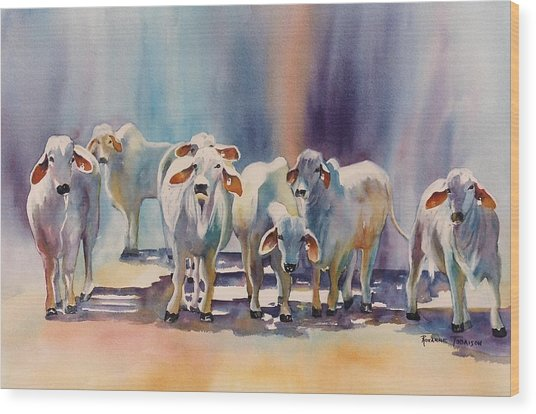 Attention All Ears.  Brahman Bulls Wood Print