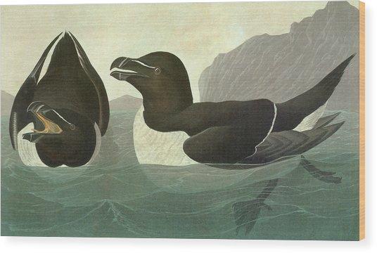 Audubon Razorbill Wood Print
