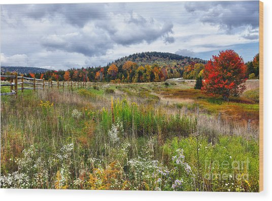 August Fall Colors Flowers And Trees I - West Virginia Wood Print by Dan Carmichael