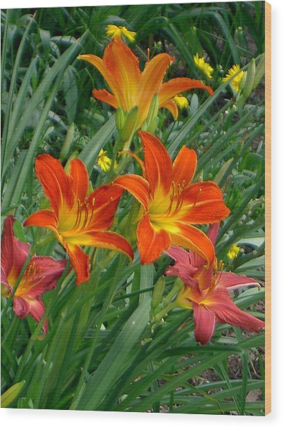Lilies Galore Wood Print