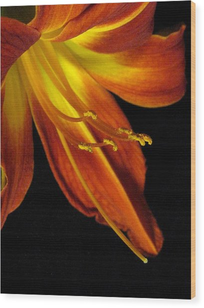 August Flame Glory Wood Print