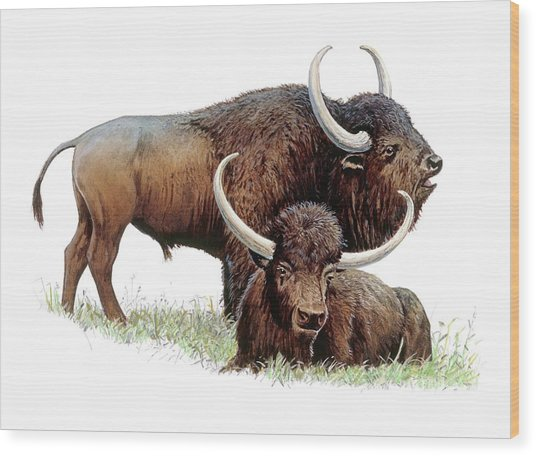 Aurochs Wood Print by Michael Long/science Photo Library