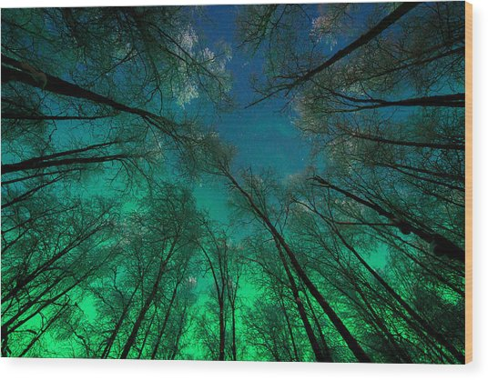 Aurora Glow Through The Birches Wood Print