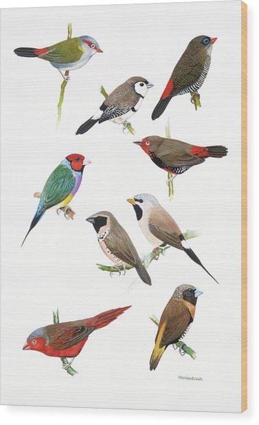 Australian Estrildid Finches Wood Print