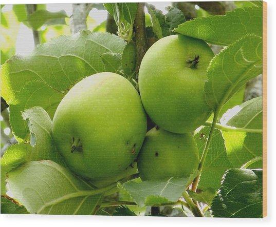 Australian Ganny Smith Apples Wood Print by Sandra Sengstock-Miller