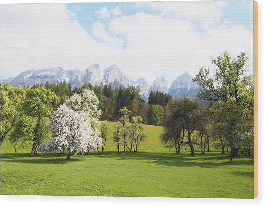 Austrian Landscape In Spring Wood Print by Brooke T Ryan