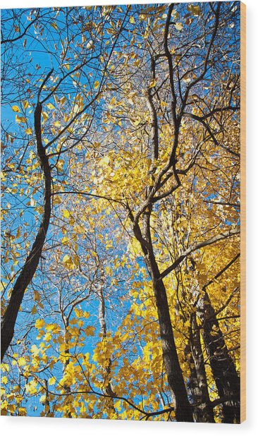 Autumn Abstract Wood Print by Jeanne Sheridan