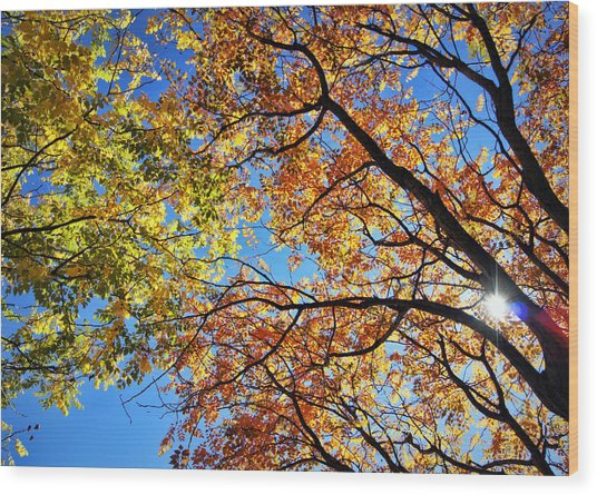 Autumn Afternoon Wood Print
