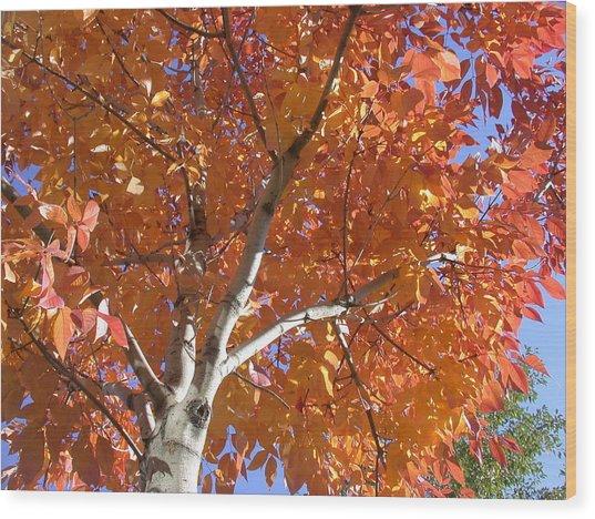 Autumn Aspen Wood Print