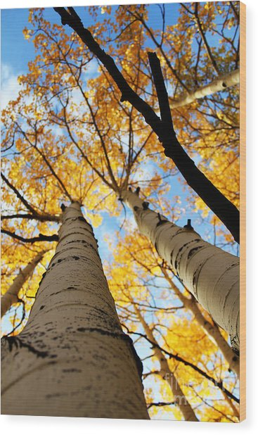 Wood Print featuring the photograph Autumn Aspens by Kate Avery