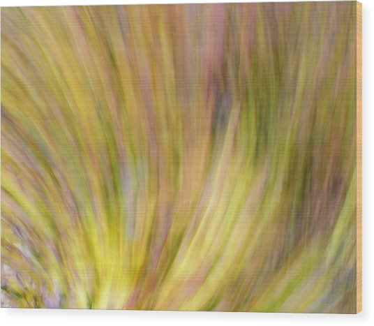 Autumn Azaleas 4 Wood Print