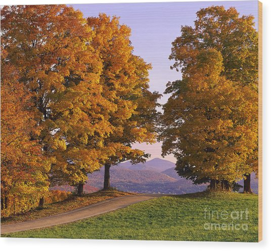 Autumn Backroad View Wood Print