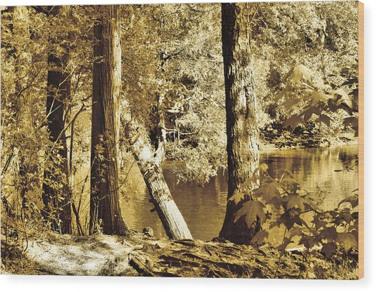 Autumn Breeze  Wood Print by Thomas  MacPherson Jr
