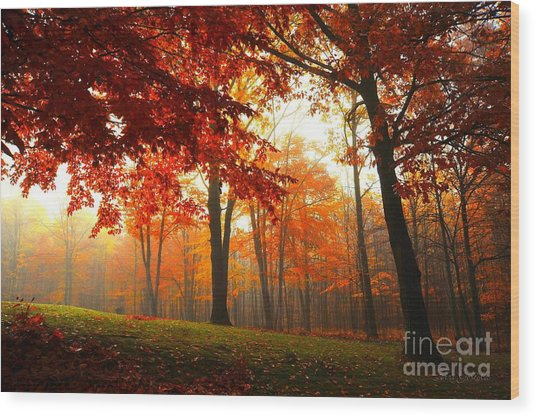 Autumn Canopy Wood Print