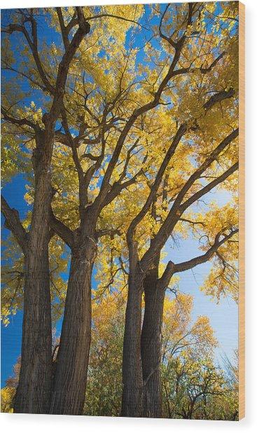 Autumn Color Wood Print by Allen Lefever