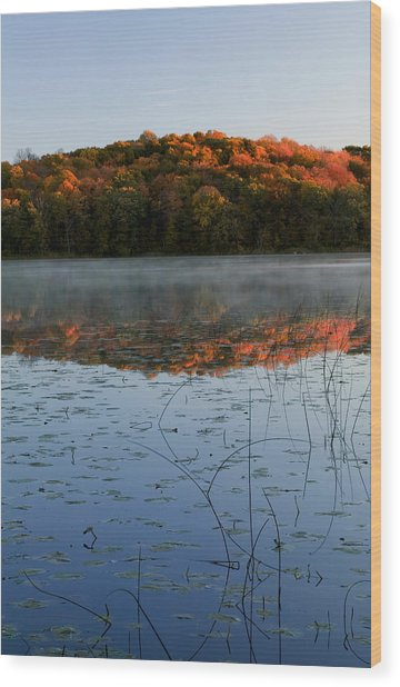 Autumn Color Forest Reflected In Grass Wood Print