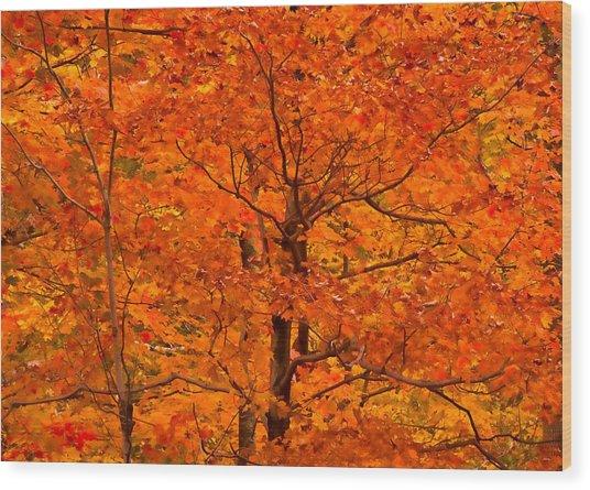 Autumn Color Splash Wood Print