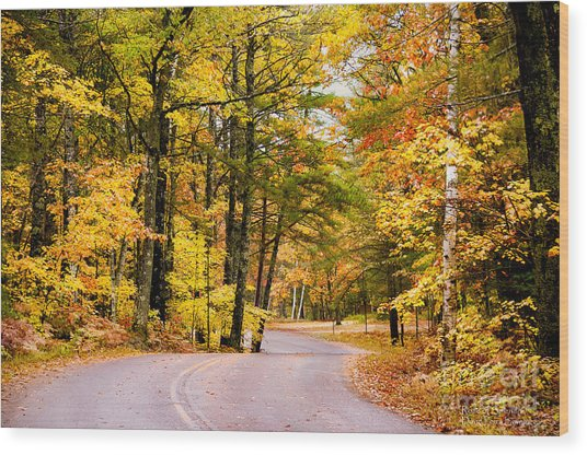 Autumn Colors - Colorful Fall Leaves Wisconsin - II Wood Print