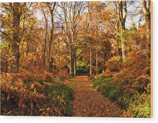 Autumn Colour Wood Print