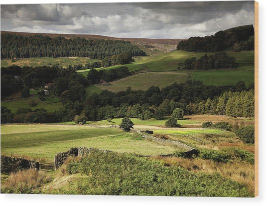 Autumn Colours In The North Yorkshire Wood Print by Dan Kitwood