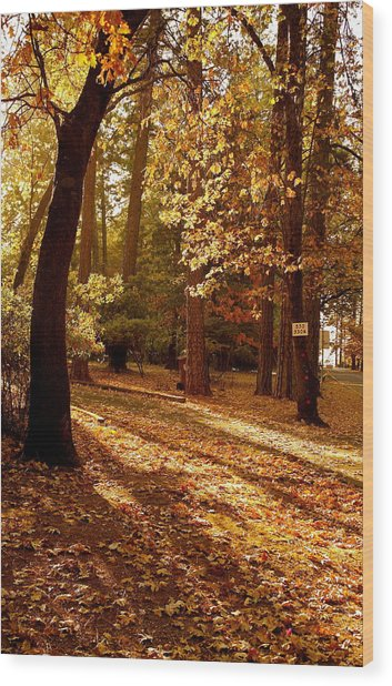 Autumn Country Lane Evening Wood Print