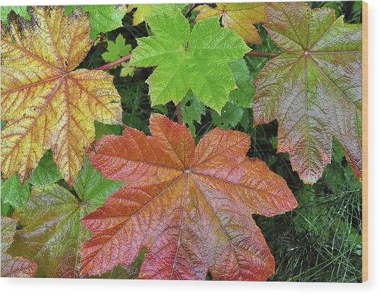 Autumn Devil's Club Wood Print