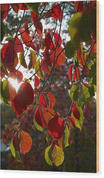 Autumn Dogwood In Evening Light Wood Print